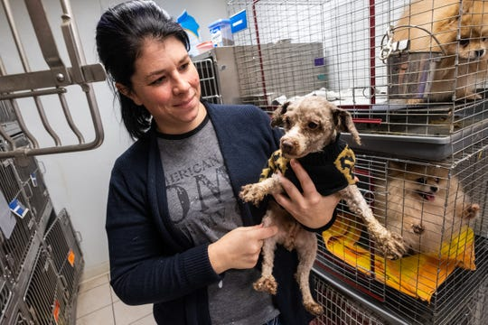 St. Clair County Animal Control Director Erika Stroman holds one of the dogs the organization rescued earlier this week Friday, Nov. 8, 2019, at the shelter. The department rescued 83 dogs from a property that was allegedly breeding them, as well as five cats and two birds.