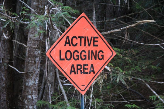 A logging site along Forest Road 2041.