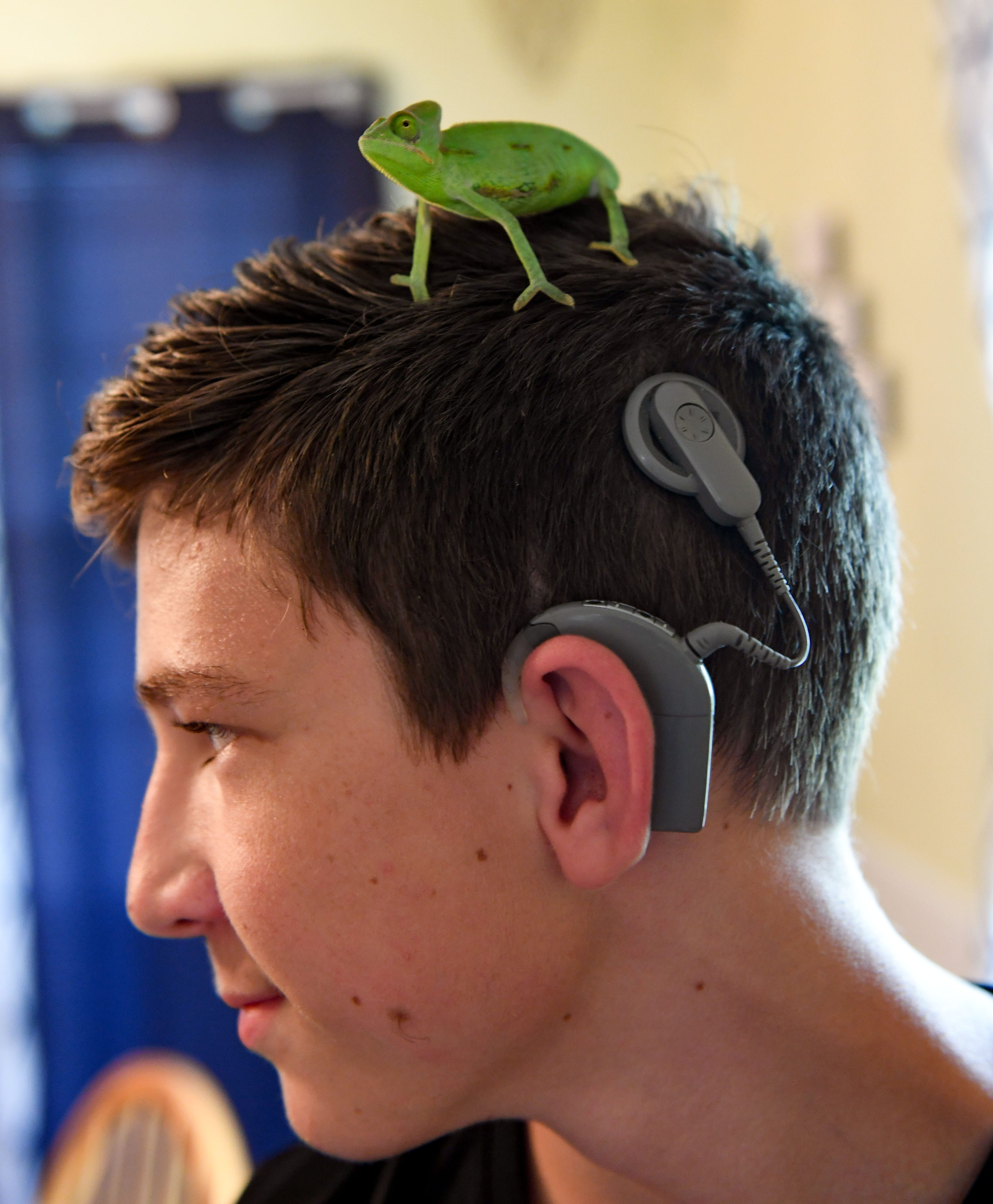 Trey Diedrich has a pet chameleon named Yoshi. Chameleons have a limited set of tones they can hear because they do not have traditional ears, which Shawna Diedrich says reminds her of Trey's deafness.