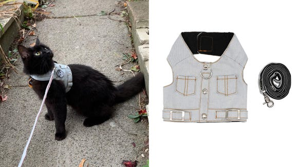 This denim vest is comfortable and supportive for cats—and incredibly cute.