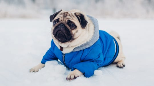 How to keep your pets safe during winter