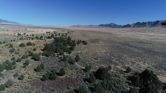 Aerial view of the Bahsahwahbee Traditional Cultural Property in White Pine County, Nev. Three Shoshone tribes are fighting against a proposal to move groundwater from rural Nevada to Las Vegas. They worry the project threatens the trees, which are sacred and a memorial to people killed in 19th Century massacres.