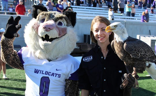 The Abilene Christian University wildcat mascot poses with Saturday afternoon's special guest, an American bald eagle, at Wildcat Stadium. Nov 9 2019
