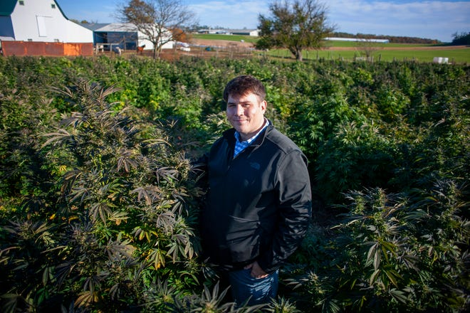 Jonathan Baker, owner of TFP Sciences, stands in a field of hemp in rural Whitewater on Oct. 25, 2019. Baker, 29, moved back to Fort Atkinson this year after spending a decade in northern California, where he'd built a life as a cannabis activist and small-scale grower of legal cannabis strains for therapeutic use.