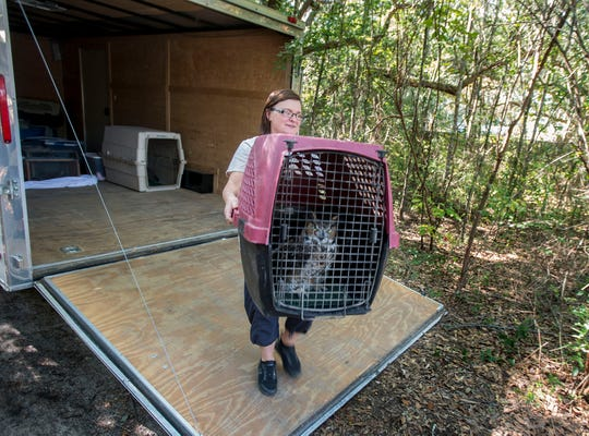 Danielle Seifried brings an owl to the new location of the Emerald Coast Wildlife Refuge in Navarre on Sunday.