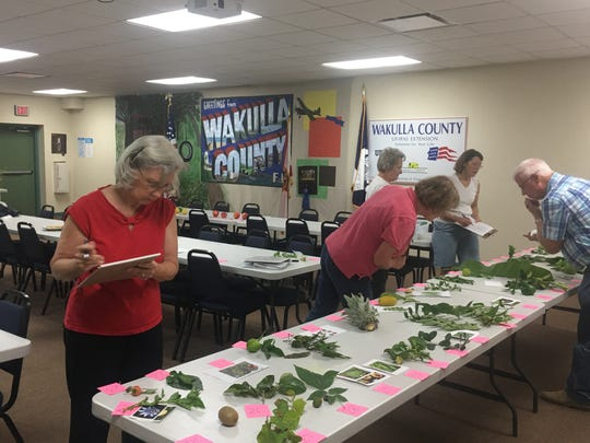 Preparation for the contest took hours of study and examination of many plant and tree parts. Dr. Ed Duke, FAMU Horticulture Professor, provided detailed information and guidance to the team