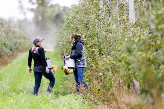 Emma Johnson (left), co-owner, and Anna Hankins (right) laugh as they pick apples at Buffalo Ridge Orchard in Central City, Iowa on Tuesday, Oct. 15, 2019. The orchard has over fifty varieties of apples, which are sold at area markets and served at local colleges and businesses.