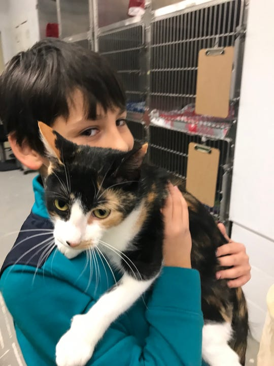 The writer's son, Xander, cuddles a cat named Cleo at Franklin County Animal Rescue in St. Albans.