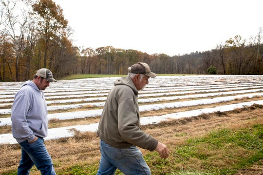 Daryl Burns, 66, and  son Addison Burns, 33, show their hemp farm in southern Campbell County. They are one of 10 farms growing hemp in Northern Kentucky.