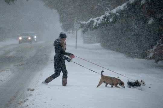 Kaylee Dickerhoof, visiting her parents from Ohio, crosses Quarton Road in Bloomfield Hills with her dogs Gus, left, and Rosie (white fur and black coat) Monday.