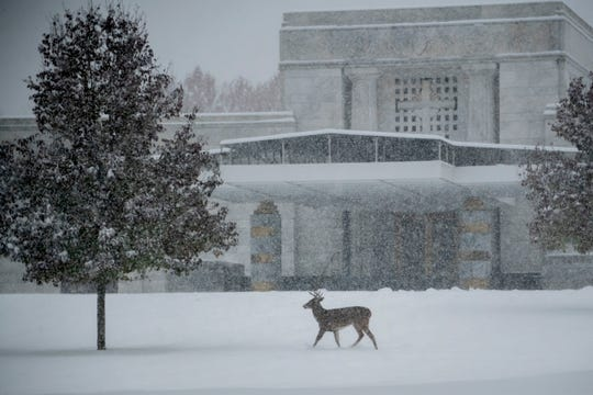 A buck walks past the main mausoleum at Holy Sepulchre cemetery, in Southfield.