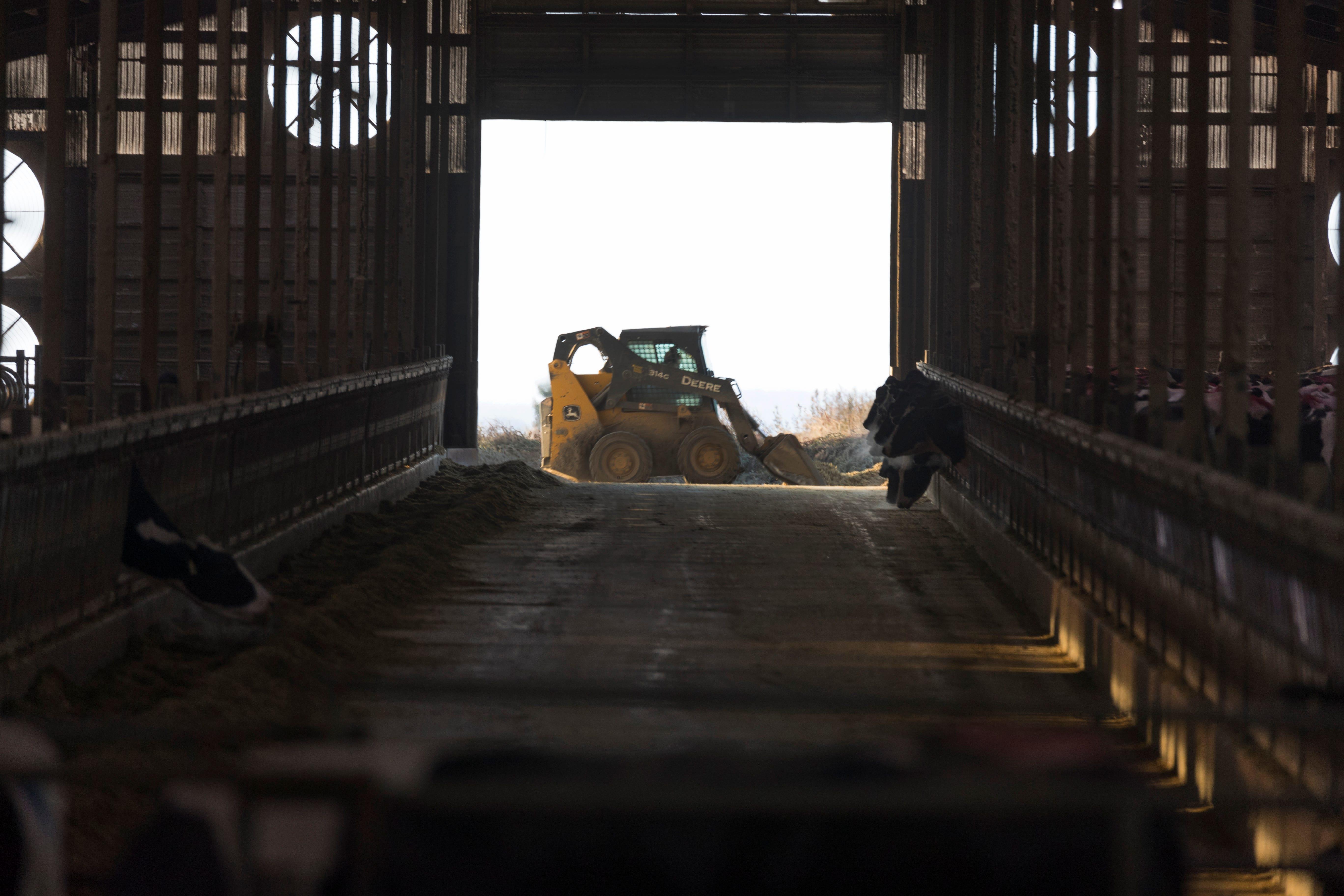A skid loader moves feed at Drake Dairy Inc. in Elkhart Lake.