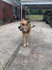 The Bastrop Fire Department called Lucy a hero on Monday for barking to alert her owners after two children fell in a pool.