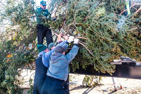 A crew does one more shove to position the tree.