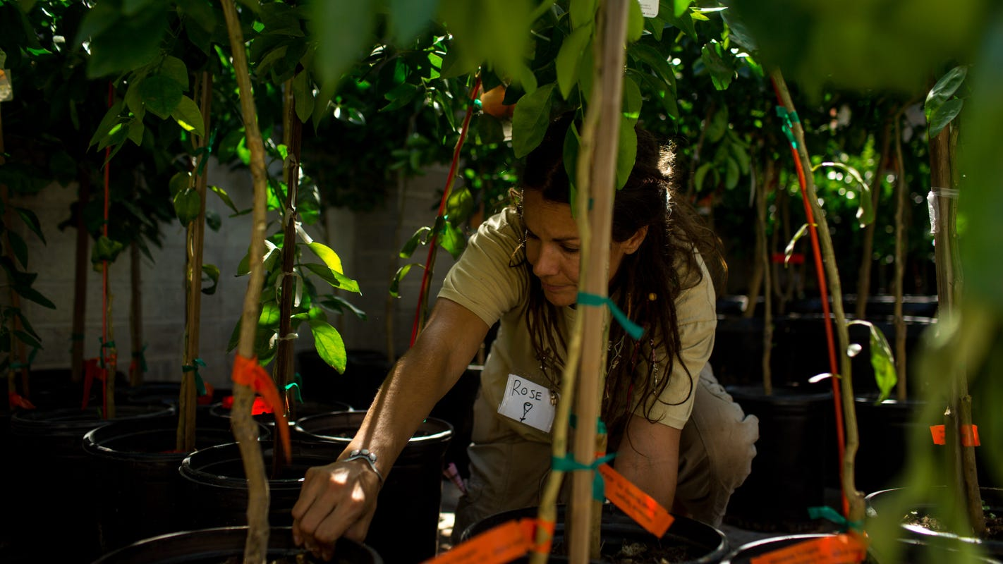 Planting Fruit Trees In Metro Phoenix