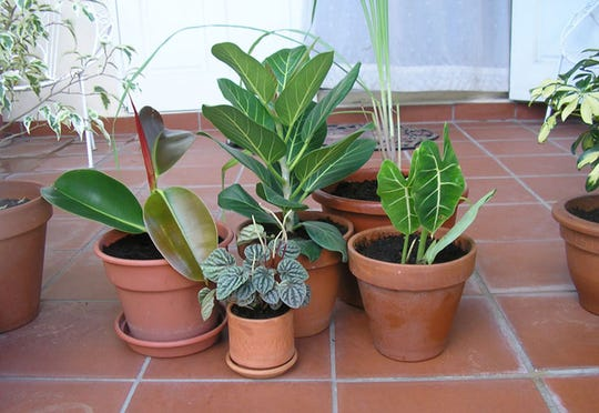 Indoor plants can perk people up and are said to purify the air.