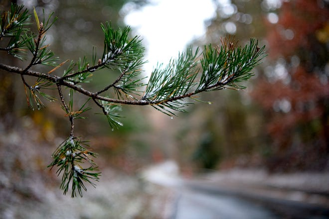 A dusting of snow clings to a tree branch along the Blue Ridge Parkway on Nov. 12, 2019.