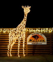 Animal Adventure Park in Harpursville will host its annual holiday event, Jungle Bells, from Nov. 14 to Dec. 29. The event will feature a lights display by Illuminations Holiday Lighting.