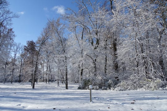 The sun shines on snow-covered trees in Aumiller Park on Tuesday morning.