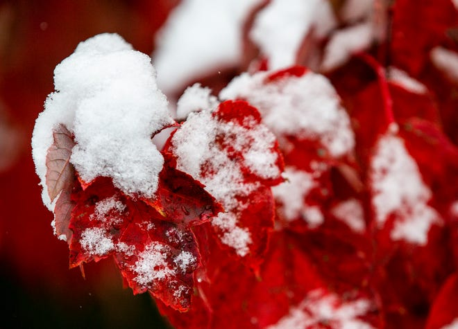Fall leaves make for a beautiful scene in snow-covered Glendale on Tuesday, Nov. 12, 2019. A storm dumped a record-setting amount of snow in the Cincinnati region Monday night.