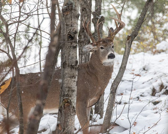Steve Lindberg, a former state representative, spied a three-antlered deer in Marquette and posted it to his Facebook page.