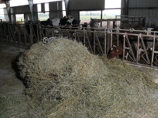 A wet spring kept farmers from harvesting forage until much later than usual this year, and that could have serious consequences for nutrient quality. Purdue University Extension specialists suggest livestock operators have their forage tested and seek guidance from a nutritionist to ensure that animals receive proper nutrition this winter.