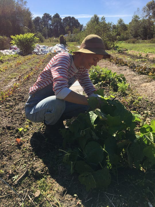 "Kim Culotta, co-garden manager, checks out her produce. Earthshare Gardens, a local, nonprofit organic garden is hosting a ""Farm Fresh Brunch"" Nov. 17 to raise money for a walk-behind tractor, a machine that will help take the farm to the next level."