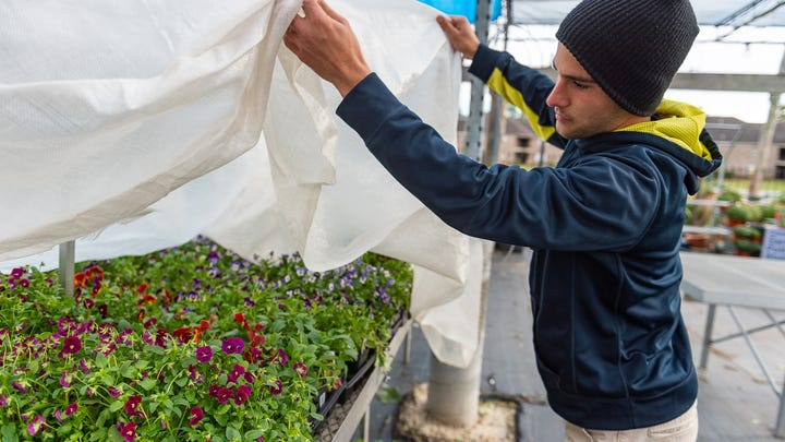 Dustin Richard at All Seasons preparing plants for the cold weather predicted for tonight.  Tuesday, Nov. 12, 2019.