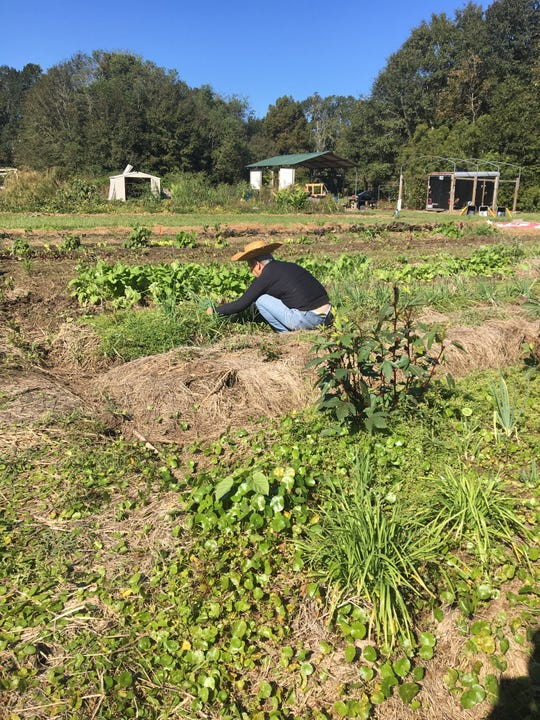 "Volunteers help on the farm before gathering their weekly harvest. Earthshare Gardens, a local, nonprofit organic garden is hosting a ""Farm Fresh Brunch"" Nov. 17 to raise money for a walk-behind tractor, a machine that will help take the farm to the next level."