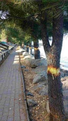 Nine trees in South Lake Tahoe were vandalized over the weekend. Police are looking for suspects.