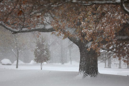 Many trees in Seneca Park still had their leaves when the snow started falling Monday.