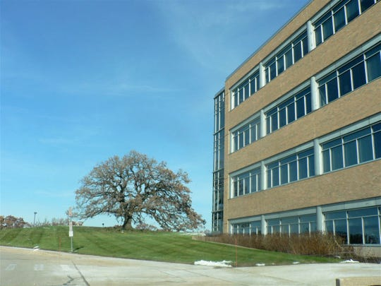 The headquarters of Wisconsin Department of Trade and Consumer Protection stands next to the Bill Graham tree.  The tree remaining (forever) was part of  the original agreement in which Graham sold the land to the state.