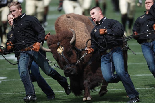 Handlers guide Colorado NCAA college football buffalo mascot Ralphie V on a ceremonial run at a game against Nebraska on Sept. 7 in Boulder, Colo.