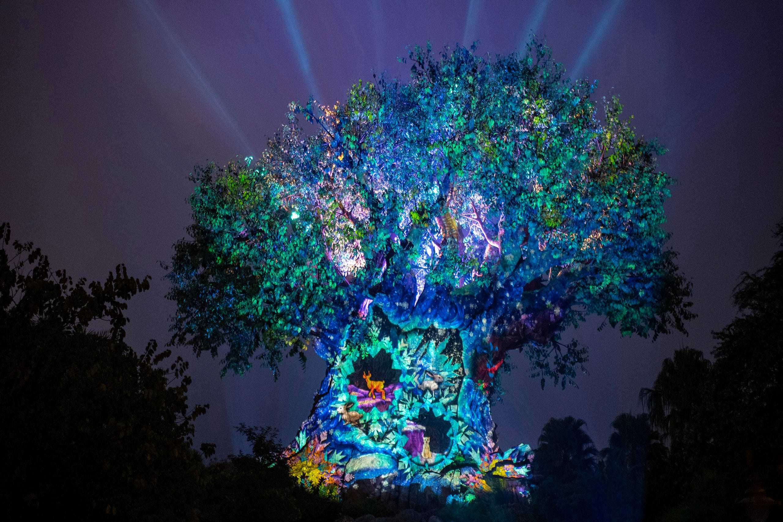 Disney World Animal Kingdom s of the new holiday