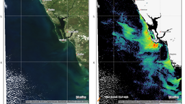 Cold front unlikely to reduce red tide in SWFL