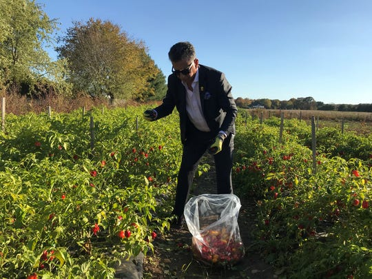 Rowan University President Dr. Ali Houshmand picks hot peppers at a farm in Glassboro, just outside of campus. He and a team of students make hot sauce to raise money for students experiencing food insecurity.