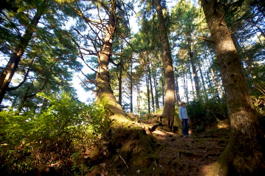 The Mike Miller Trail travels through old-growth forest near South Beach State Park outside Newport, Oregon.