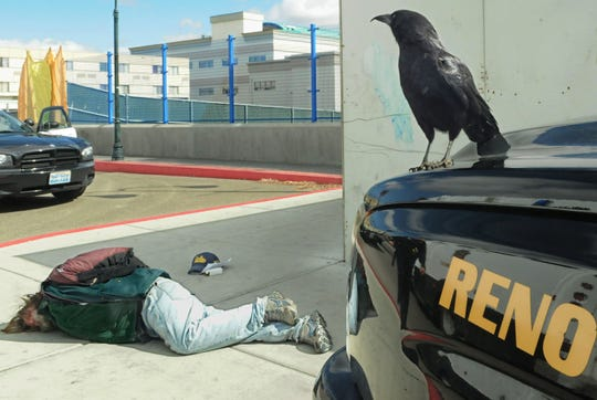 Alfred the Reno Police raven keeps an eye on a suspect under arrest on Evans Avenue in front of the Reno Aces ballpark Monday March 19, 2012.  Alfred has adopted the cops and often shows up at scenes where they are.