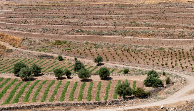 Cyprus' climate and fertile soil bode well for grape growing. You'll see vineyards in Paphos as well as in the Troodos mountain range.