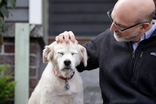 University of Washington School of Medicine researcher Daniel Promislow, the principal investigator of the Dog Aging Project grant, rubs the head of his elderly dog Frisbee at their home in Seattle.