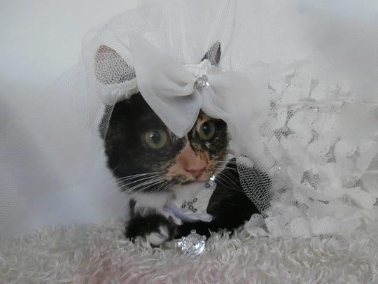 Li'l Lily models her wedding dress.