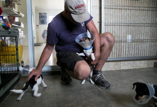 Kurt Donovan plays with puppy siblings Autumn, Winifred and Ichibod at Animal Refuge Center (ARC) in North Fort Myers.