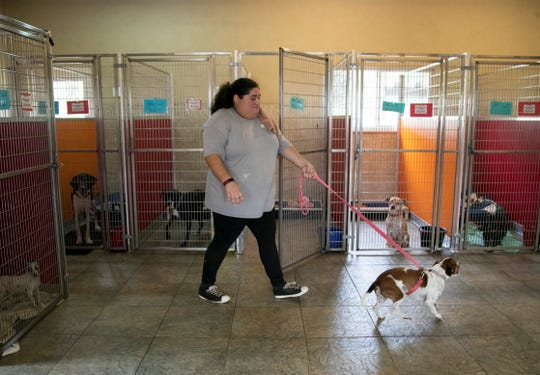 Rachel Conrado walks one of the new dogs at Animal Refuge Center (ARC) in North Fort Myers on Thursday, Nov. 14, 2019.