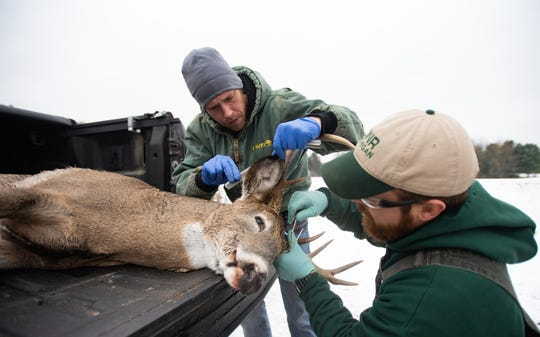 DNR employees examine a deer's antlers in Bath Township in Michigan on Nov. 15, 2019. Field officers and biologists are gathering information on harvested deer to better understand their location, movement and for signs of ticks and chronic wasting disease.