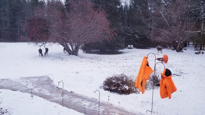 Deer browse in a yard as blaze orange hunting clothing airs out in preparation for the 2019 deer hunting season.