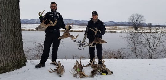 Wisconsin conservation wardens Ed McCann, left, and Shawna Stringham, pose with illegally killed white-tailed bucks and a seized crossbow that was part of a wide-ranging poaching investigation in southwest Wisconsin. The case is among the biggest in Stringham's nearly 19 years as a warden.