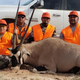 Carlsbad's Alfredo Olivas Jr., left, shot and harvested a 436-pound Orxy at the Stallion Range in San Antonio, NM on Nov. 9. Helping Olivas Jr. with his hunt were Alfredo Olivas Sr. Chuy Salcido and Angel Madrid.