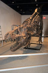 This T. rex replica will be one of the main attractions when the Farmington Museum at Gateway Park presents its  Dinosaur Discovery Day Nov. 23.
