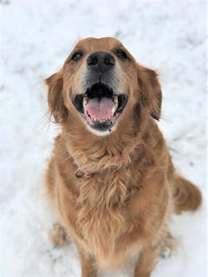 Autumn is among the senior animals at the Oshkosh Area Humane Society waiting for adoption.