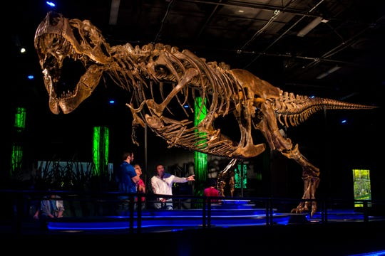 Victoria, the largest and most complete touring T. rex in the world is shown Friday, November 15, 2019, at the Arizona Science Center.
